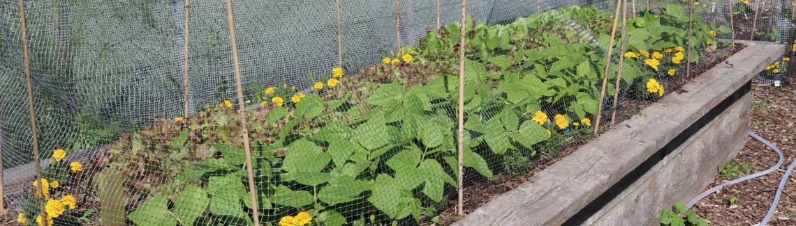 A planter in the Harcourt garden