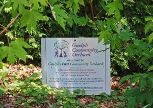 """Sign in the ground that says """"Guelph Community Orchard"""""""