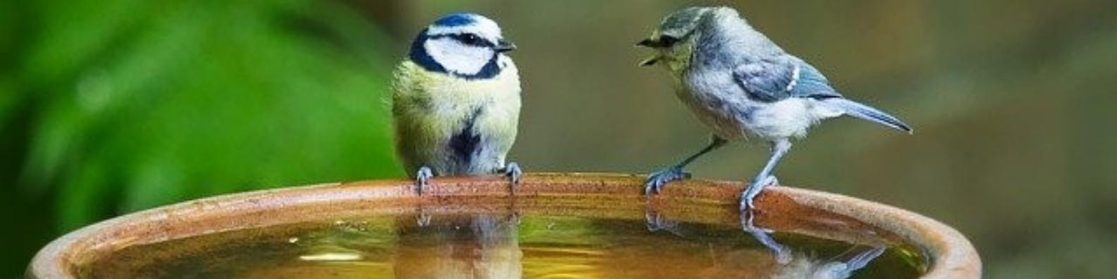 Two birds facing each other in a bird bath.